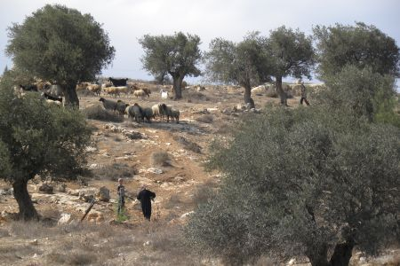 Sheep on the Road to Bethlehem